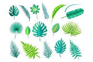 Tropical Foliage Collection Vector Illustration