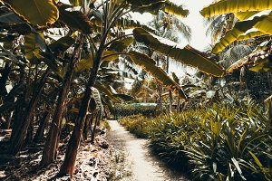Pathway under palms in rainforest