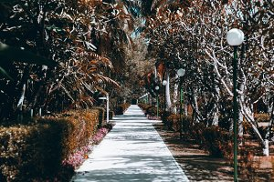 Footpath in tropical resort