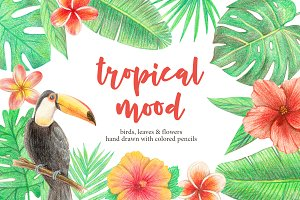 Tropical set illustrations