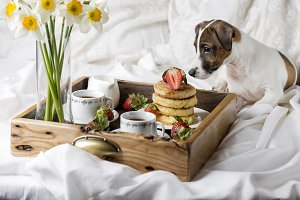 Breakfast in bed: cottage cheese pan