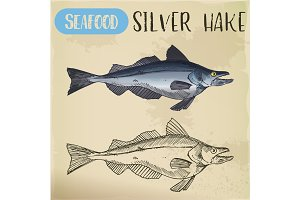 Silver hake or New England fish sketch