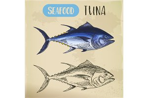 Bullet or bluefin tuna sketch for signboard