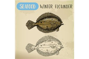 Winter flounder side view sketch for sign