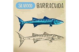 Sketch of ray-finned barracuda, sphyraena