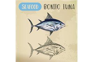 Bonito tuna or sardini tribe fish, mackerel sketch