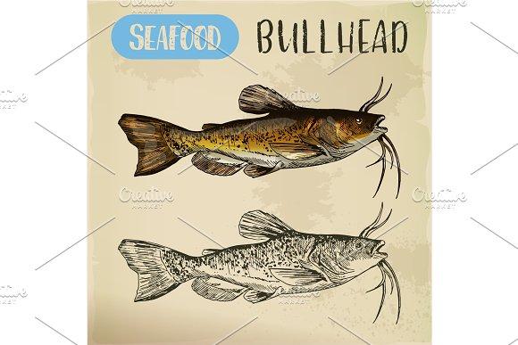 Sketch of bullhead or sculpin fish