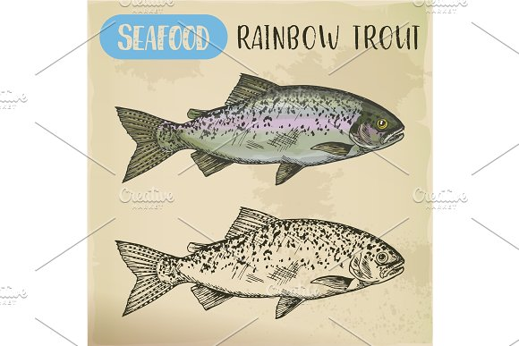 Rainbow trout sketch or coastal redband fish in Illustrations