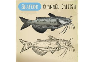 Channel catfish sketch. Seafood and fish