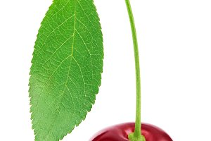 Fresh cherry with leaf isolated on white