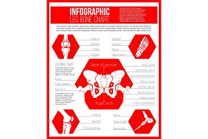 Anatomy chart of human bones for medicine design