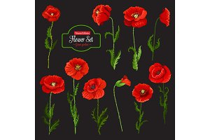 Poppy flower icon of red wildflower and green leaf