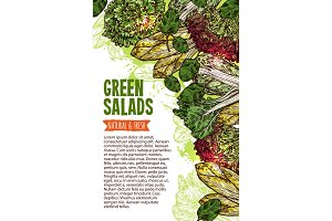 Green salad sketch banner of fresh leaf vegetable