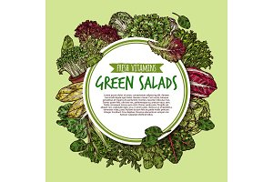 Green salad sketch poster of fresh leaf vegetable