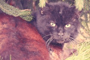 Colorful Cat lying under a Pinetree