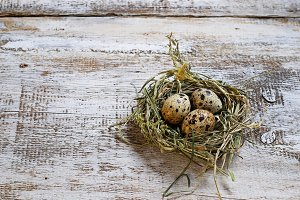 Quail eggs in the nest