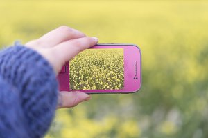 Woman hands taking photo flowers wit
