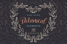 Hand Drawn Botanical Vector Elements by Pixavics in Illustrations