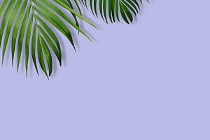 Tropical leaves on violet background
