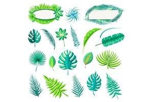 Leaf of Tropical Style Set Vector Illustration