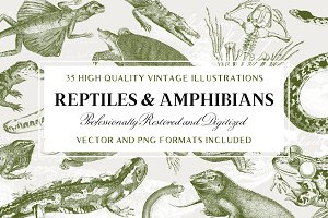 35 Reptile & Amphibian Illustrations
