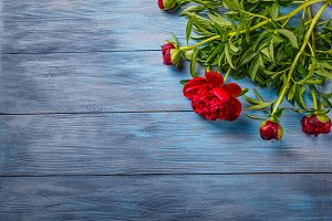 Peonies on blue wooden background