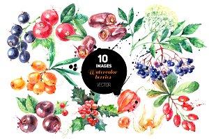 Watercolor Berries Vector Set 2