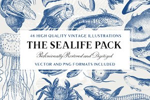 46 Vintage Sealife Illustrations