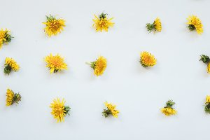 Dandelion flowers on white backgroun