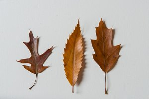 Autumn leaves photography