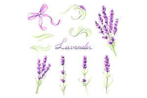 Lavender flowers and bunches set. Watercolor natural illustration of Provence herbs