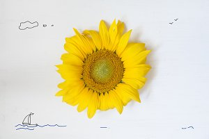 summer concept , sunflower - sun and the sea with yacht
