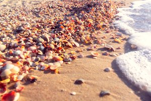 sea coast with shells