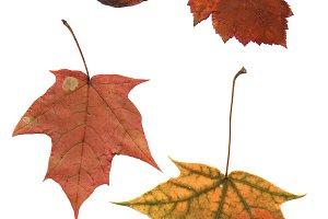 яркие старые осенние разные листья