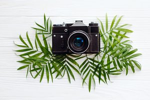 black old photo camera on green palm