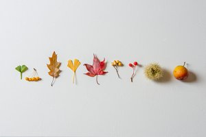 Autumn leaves and fruit photography