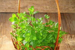 Fresh homemade green peppermint in a basket on an old wooden table.