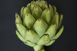artichoke dark background