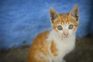 Tiny Orange Kitten with Blue Eyes