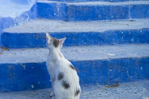 Kitty poised on Stairs in Blue City