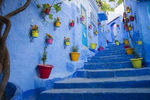 Colorful Flower Pots in Blue City