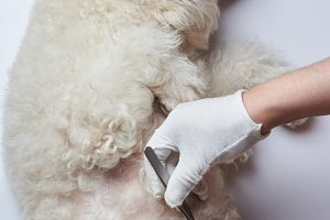 Medical vet inspection of dog