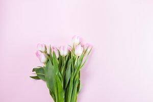 Pink fresh tulips