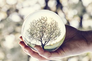 A tree reflection in a glass ball he