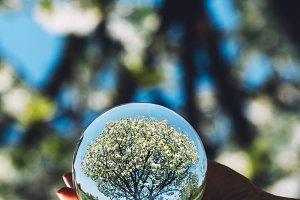 A tree and bright blue sky reflectio