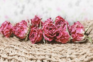 Dry red roses for nostalgie