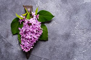 Lilac branch on grey background
