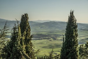View of Tuscan landscape in cypress