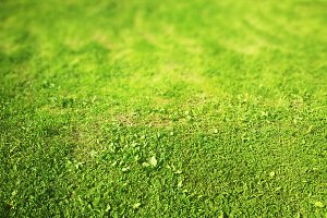 Green grass lawn bokeh background