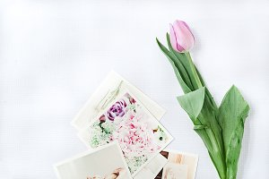 Styled Stock Photo Tulip photos
